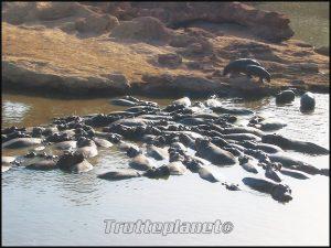 Hippopotames Kenya