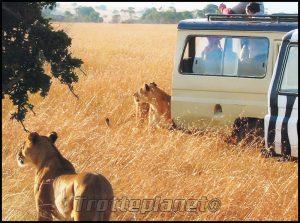 Savane Kenya