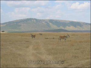 Masaï mara Kenya