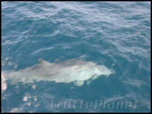 Dauphins iles Grenadines